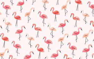 Hintergrund Bildschirm Desktop Flamingos
